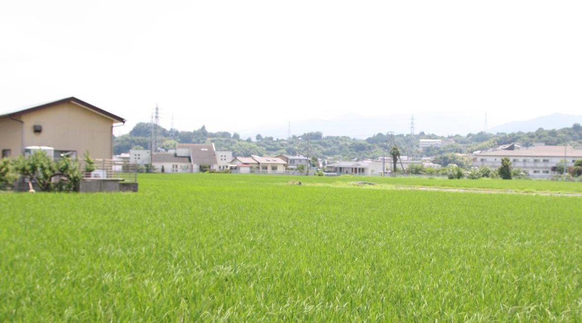 緑豊かな町並み