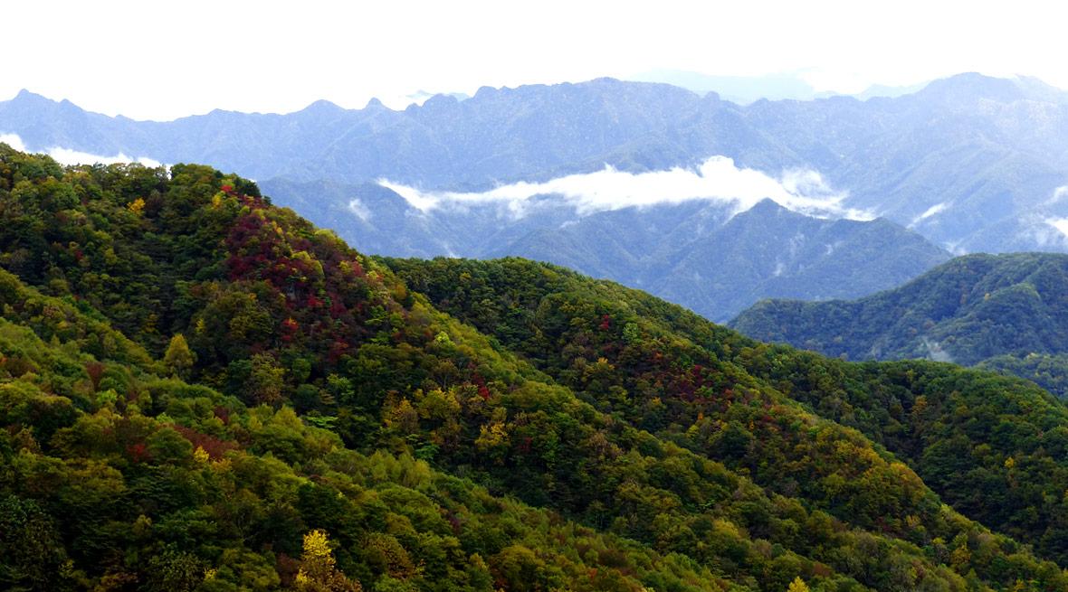 """""""伐採地の美しい森や、地域の人々と共にある木材"""